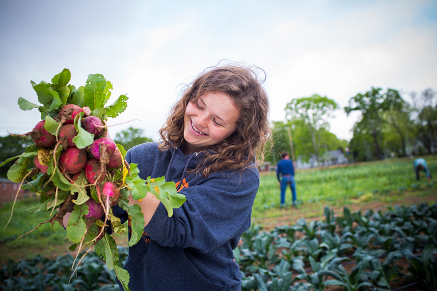 An Oxford student holds up a bunch of radishes from the organic farm