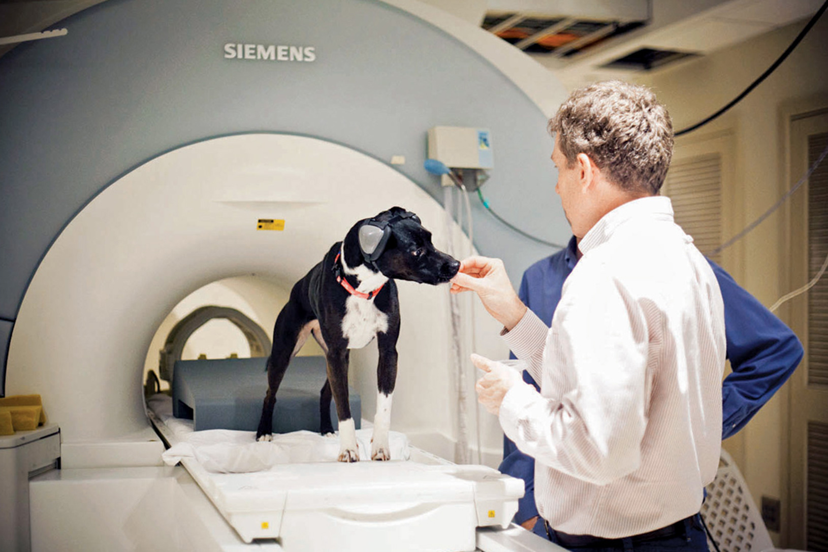 MRI research on conciousness of dogs